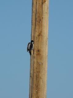 colibrí, pájaros