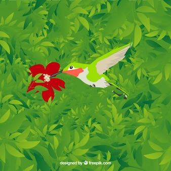 Colibrí con la flor roja
