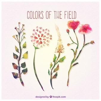 Colores del campo