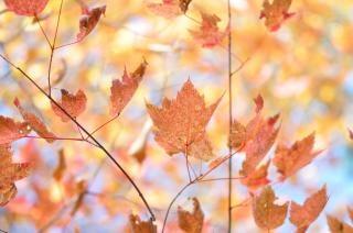 Colores del otoño caen