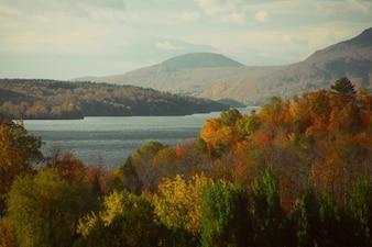 Colores del otoño en el bosque