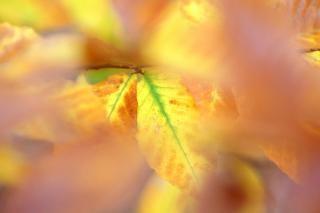 colores del otoño septiembre