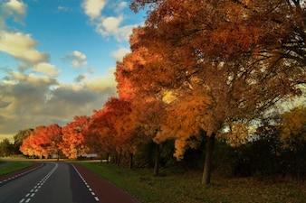 Colores del otoño y la carretera