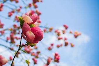 La primavera colorida