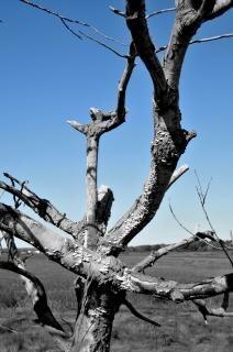 comodidad árbol solitario