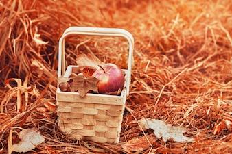 Composición de manzanas y follaje