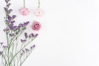 Composición floral sobre fondo blanco