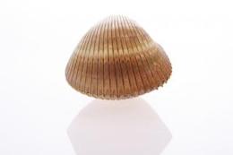 concha marina mar