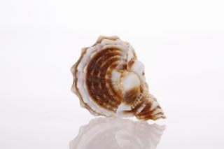concha marina tropical