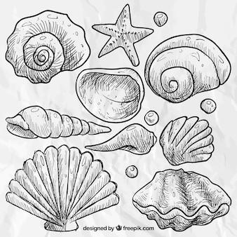 Conchas marinas dibujadas a mano