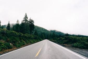 Conducir a la selva
