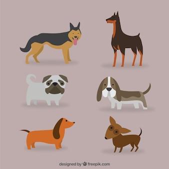 Conjunto de razas de perros