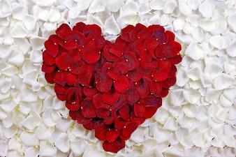 Corazón de los pétalos de Rose