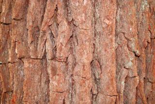 Corteza de árbol, la historia