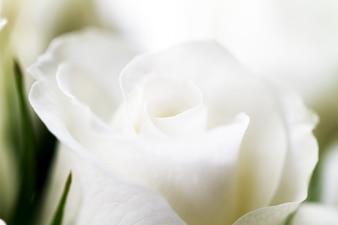 Crema de la boda del amor celebración de la hoja