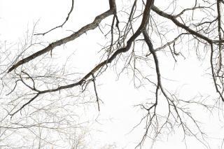 De árboles, pintura