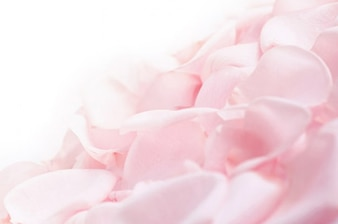 De color rosa suave pétalos de rosa