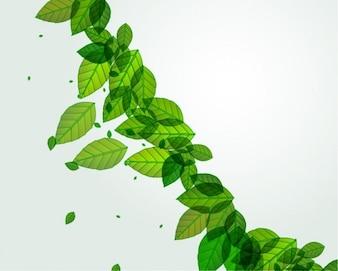 de hojas frescas de color verde de fondo vector