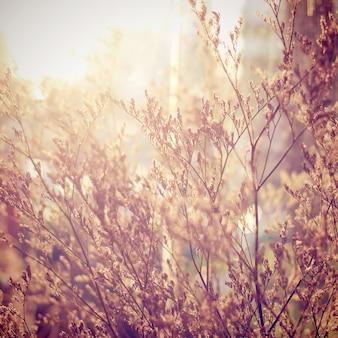 Decoración de flores secas con efecto de filtro retro