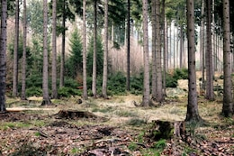 Dentro de los bosques