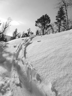 Después de la tormenta de nieve