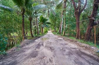 Destinos palmera frescura de viajes que caminan ambiental