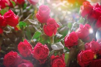 Día de San Valentín, Un enorme ramo de rosas para una mujer