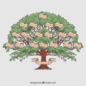 Dibujado a mano árbol genealógico