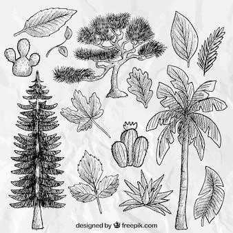 Dibujado a mano árboles