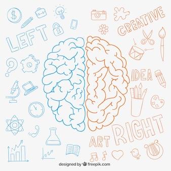 Dibujado a mano hemisferios cerebrales