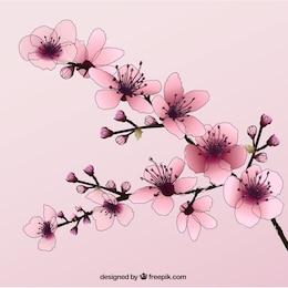 Dibujado a mano las flores de cerezo
