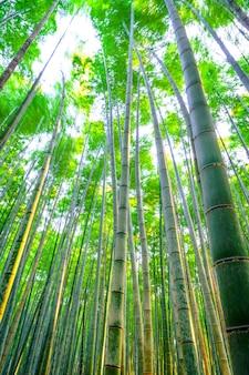 Disparar japonés belleza brillante arboleda