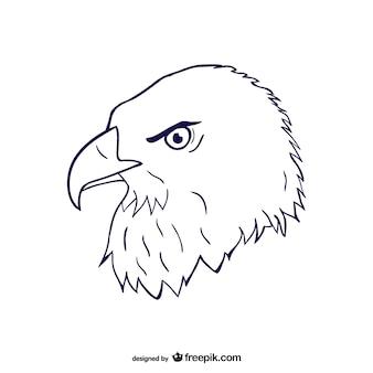 Boceto de cabeza de águila