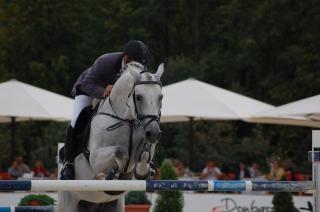 Ecuestres, el caballo
