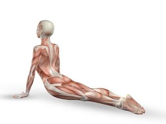 Ejercicio de yoga con músculos