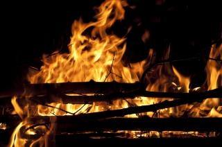 El fuego del árbol
