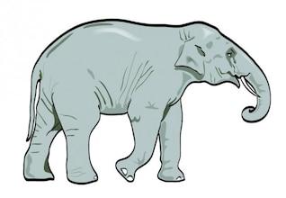 Elefante realista caminar iconos vectoriales
