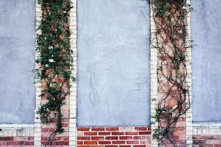 Enredadera en una pared de ladrillo