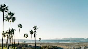 Escena de la playa del verano