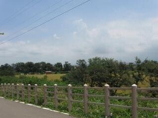 Escena rural, verde