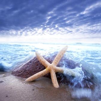 Estrella de mar apoyada en una piedra