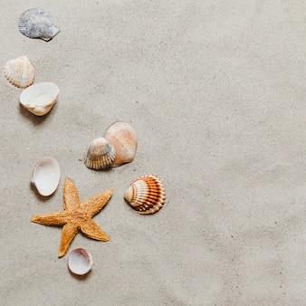 Estrella de mar y conchas en la playa