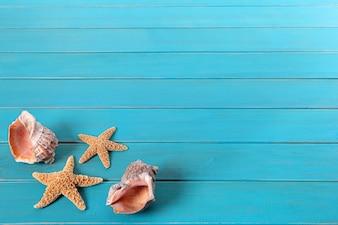 Estrellas de mar y conchas marinas