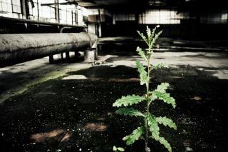 fábrica abandonada en húmedo