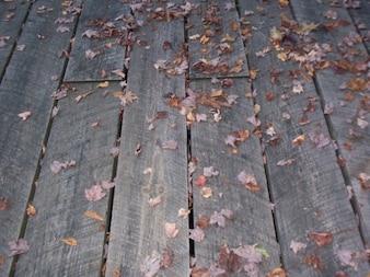 Hojas de la caída en un piso de madera