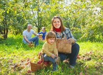 Familia feliz reúne manzanas