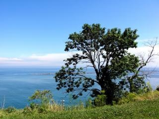 faroles Milwaukee, árbol, árboles