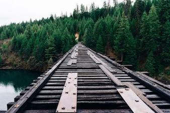 Ferrocarril al bosque