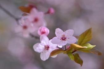 Flor blanca con fondo borroso