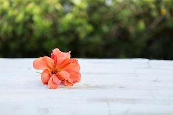 Flor bonita sobre superficie blanca